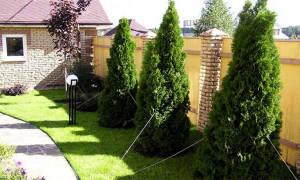 Норма посадки деревьев от забора соседа