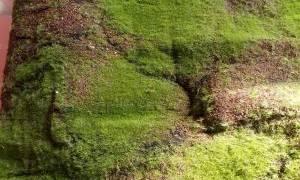 Как убрать мох с бетона?